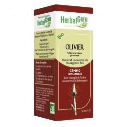 Olivier Macérat concentré de bourgeons Bio 50 ml