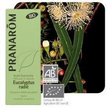 Huile essentielle d'Eucalyptus radiata BIO - 10 ml