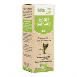 Rosier sauvage Macérat concentré de bourgeons Bio 50 ml