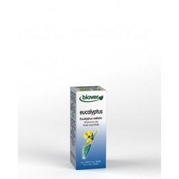 Huile essentielle Eucalyptus radiata - feuille Bio 10 ml