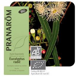 Eucalyptus radiata essentiële olië BIO