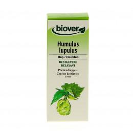 Humulus lupulus - Hop - Moedertinctuur